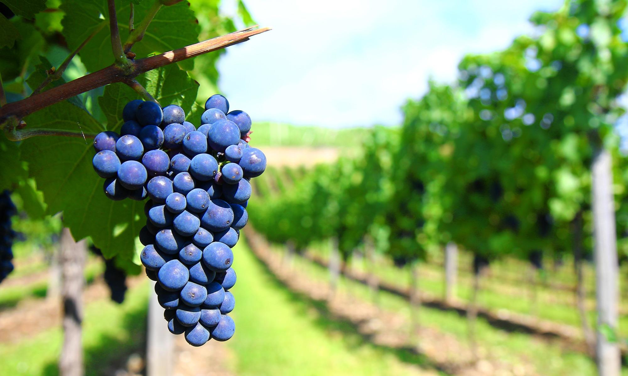 Les vins de Julie
